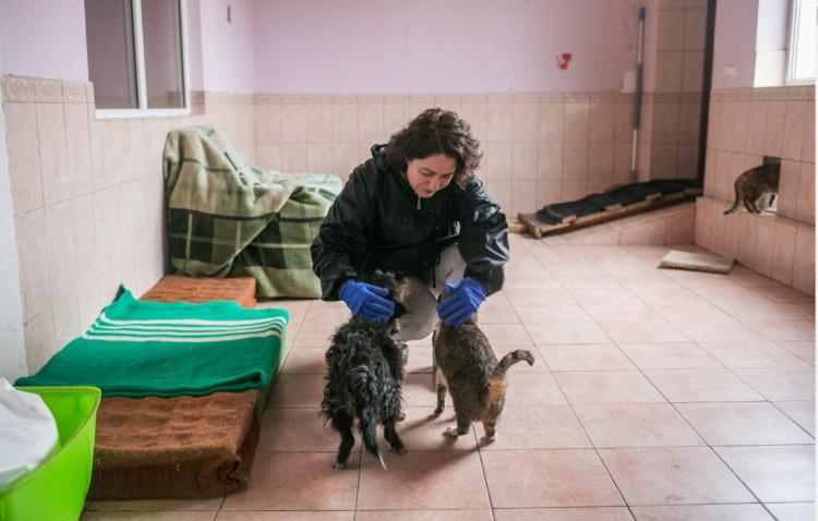 Зоопсихолог про тварин з притулку: Як обрати, виховувати і на що звернути увагу